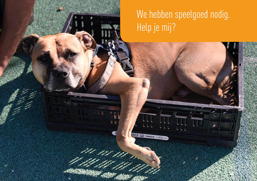 Dutch Cell Dogs, inzamelen, Chico, hond